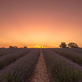 A photographic shooting at sunrise in Valensole, France.