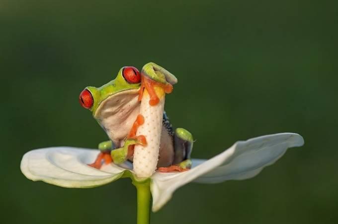 I keep myself by ALBESA - Small Wildlife Photo Contest