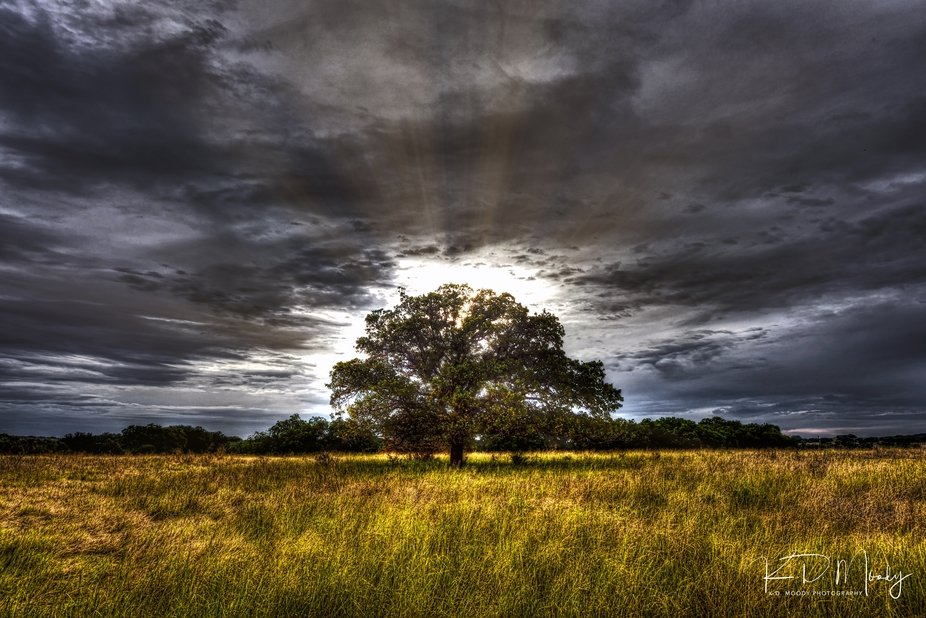 The sun breaking through an overcast sky behind an oak tree.