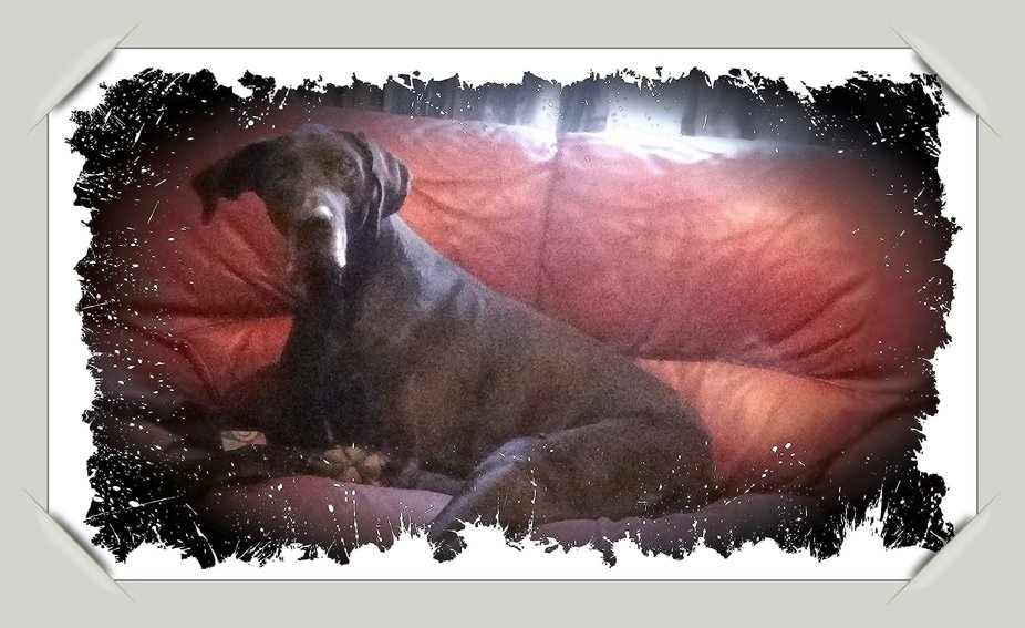 When he was little, I left him in the chair, but then there was room for me. Now he is big and there is no room for me anymore. best wishes from Theo and Jefke (The dog)