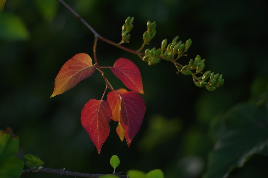 Autumn is approaching