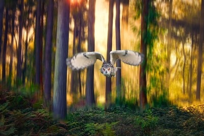 European Eagle Owl through a morning forest