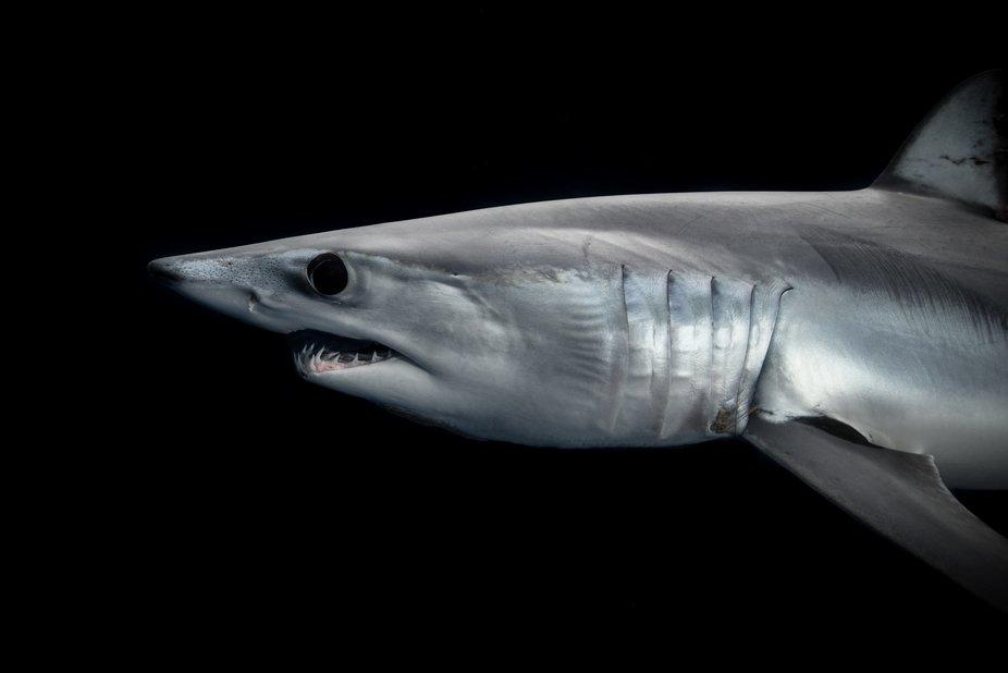 MEGA WALLS LEGENDARY SHARK - YouTube |Legendary Sharks