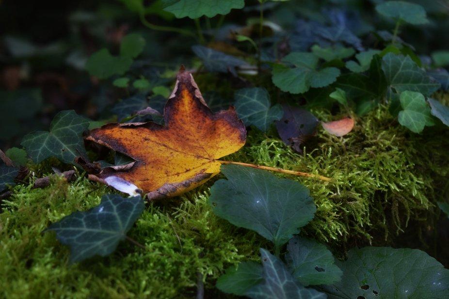 Autumn Leaf by Dawn van Doorn.
