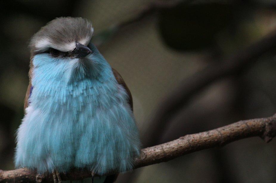 Took this while at the Atlanta Zoo!