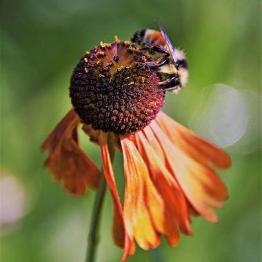 Flowers of Butchart Gardens (2) - Victoria, British Columbia, Canada