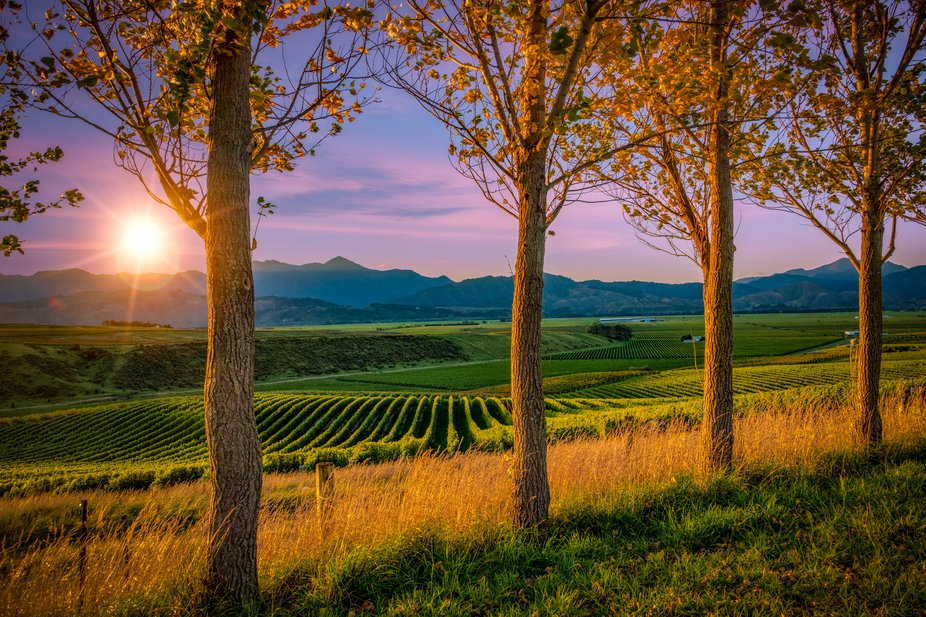 Beautiful backdrop of the Marlborough region of the South Island at sunset