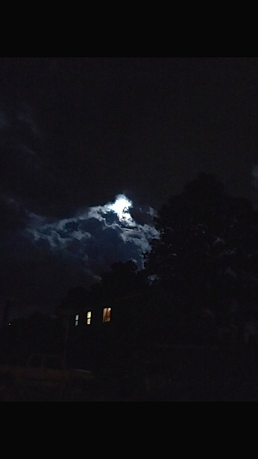 Walking my dogs at night is always an adventure, especially on nights like this.