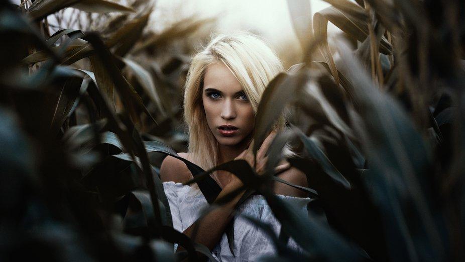 Beautiful Iva in the cornfield