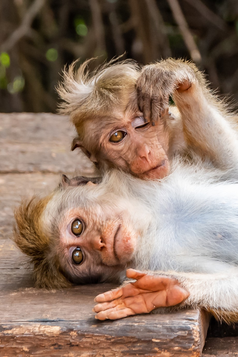 Monkeys with that just got out of bed look by johnpreston_5231 - Social Exposure Photo Contest Vol 17