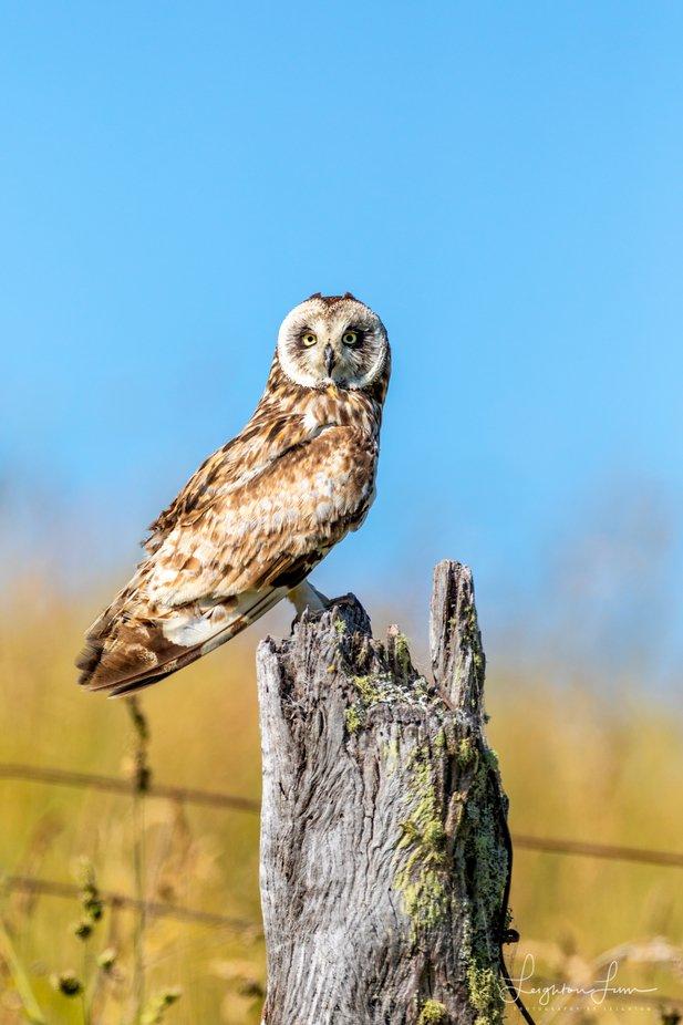 Hawaiis Bird of Prey by LeightonLum - Beautiful Owls Photo Contest