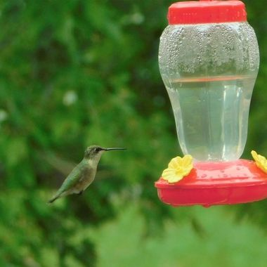 This is my very first capture of a hummingbird and it was taken through   my patio door window