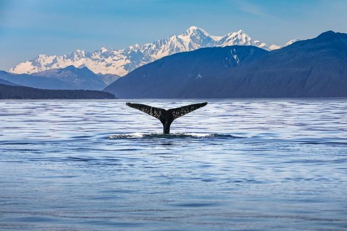 Whale tail by MBphotographybiz - Alaska The Wild Photo Contest