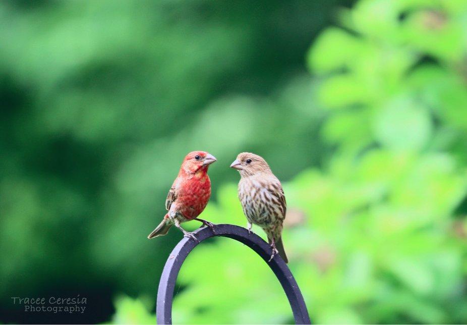 Mr. & Mrs. Finch