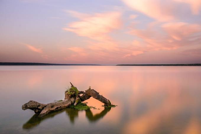 nothing by mikoshots - Picture Driftwood Photo Contest