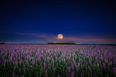 Harvest Moon Provence