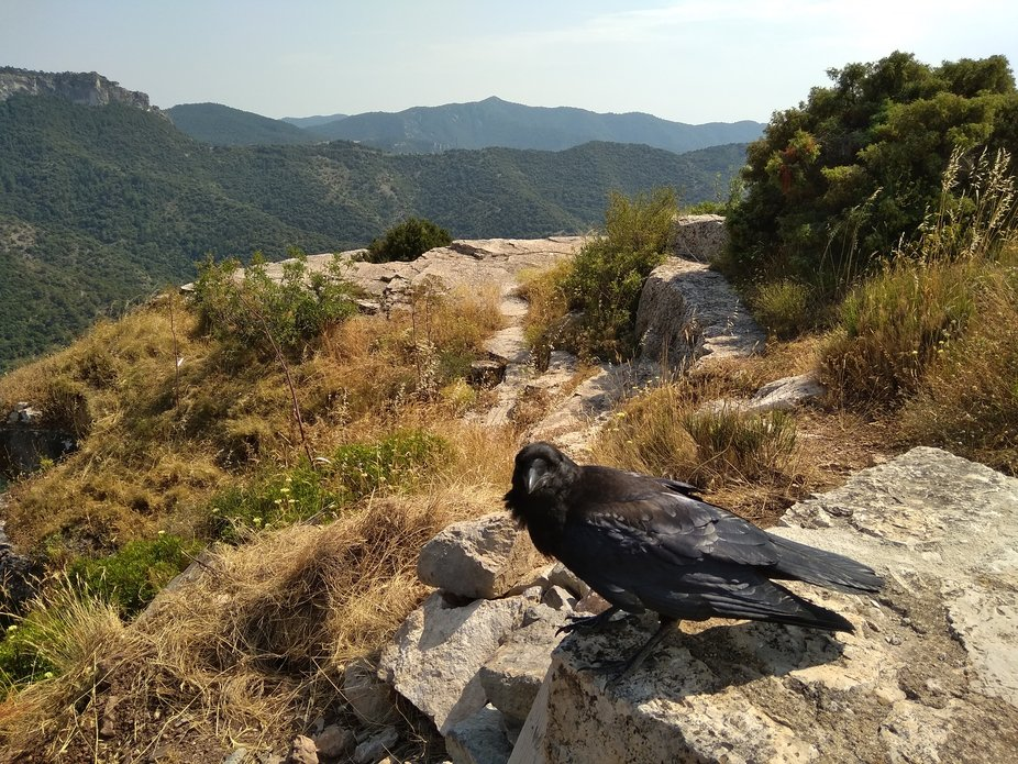 Views of the village of Siurana under the supervision of a raven