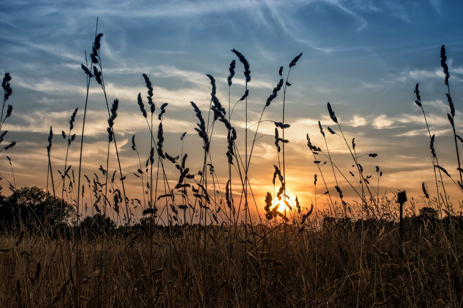 On a walk near home when the setting sun through the grass looked rather appealing. Took a few sh...