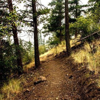 DSC_5253 Trail