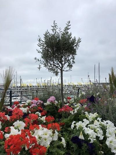 Brighton Marina and Sea Walk 8-19-18 (9)