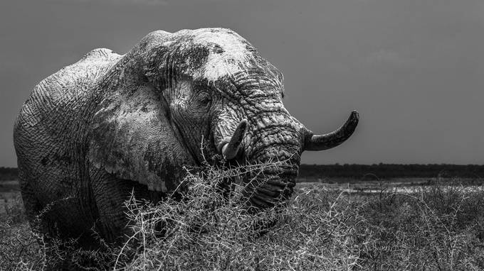 Colossus in Mono by MKPhotographysa - The Nature Lover Photo Contest