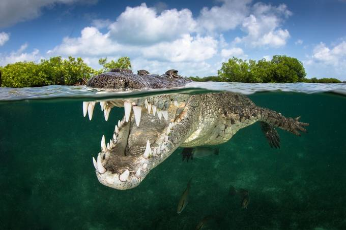 Smile by Grantjpthomas - Reptiles Photo Contest