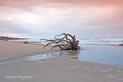 Windswept Driftwood