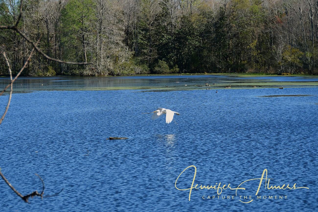 Flight Over Blue Water