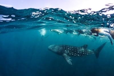 Underwater wildlife in Maldives islands