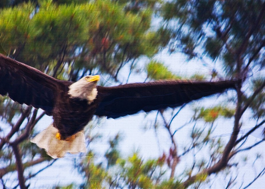 Adding brush stroke effects, this photograph captures the power and the grandeur of our national ...