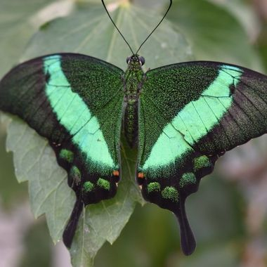 Unusual Colours of this lovely butterfly