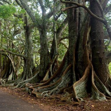 Headstone Road Norfolk Island