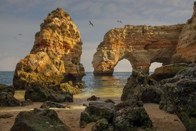 Seagulls at Marinha beach