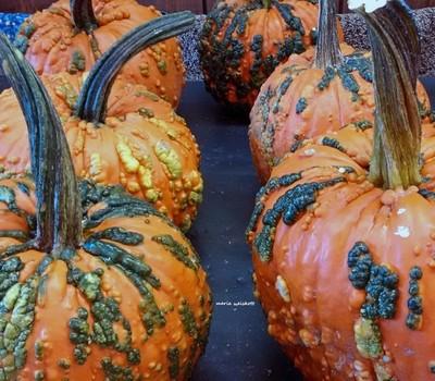 Prickly Pumpkins