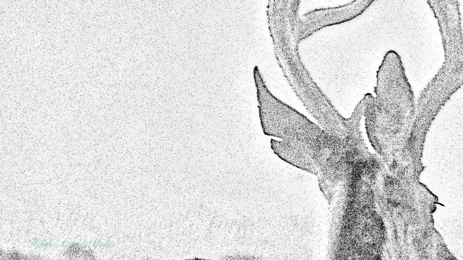 Profile of 4 point buck