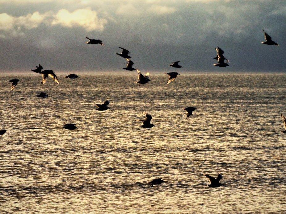 Flock of Seagulls 0824