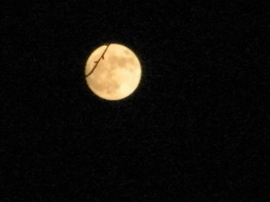 In case you missed it, heres the super moon from last night.
