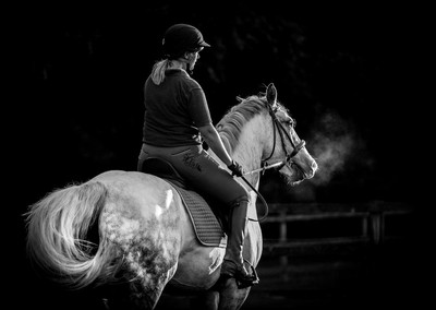 Horse and Rider - early evening light
