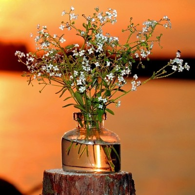 Bouquet of white flowers on the background of sunset over the lake. Macro-composition.