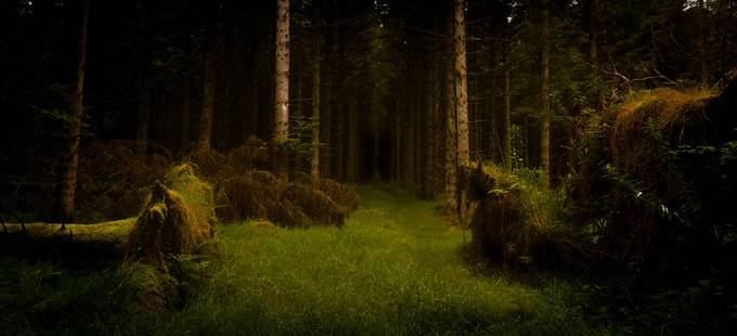 A Spooky Woodburn Forest