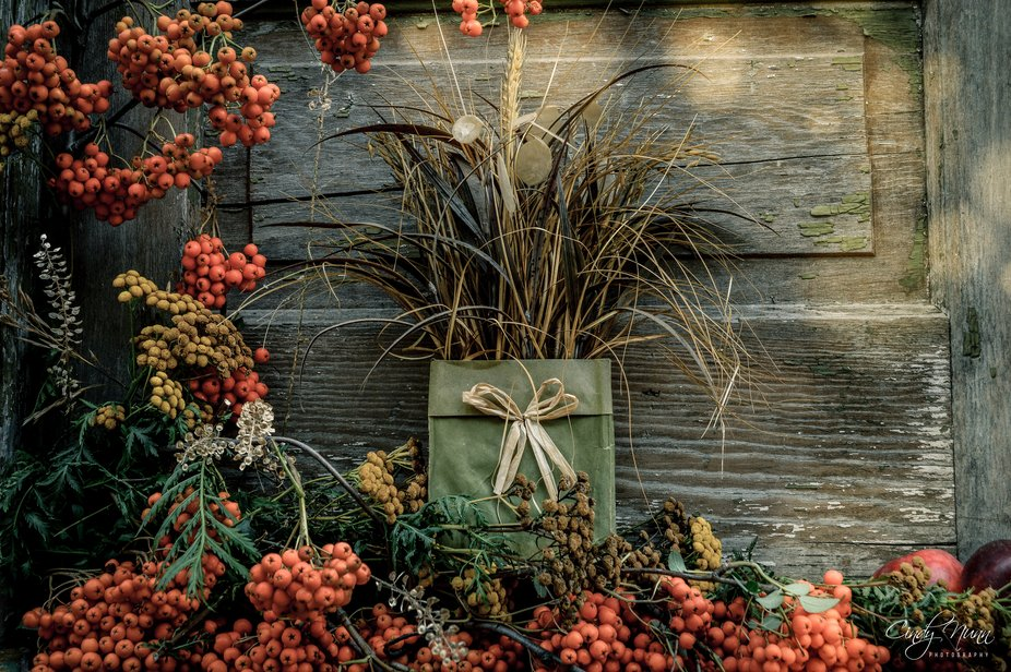 Mountain Ash Berries and Wild Tansy from my yard. Backdrop is the door of my old barn.