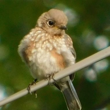 All Fluffed Up!