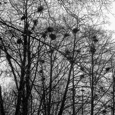 bird nests in the bare trees