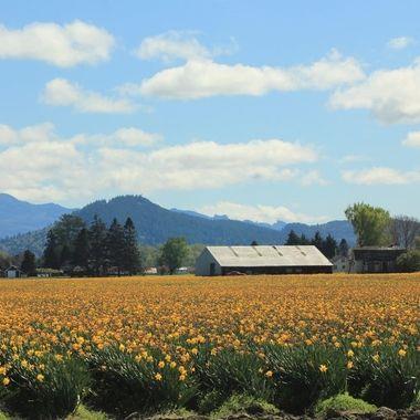 spring in Mt. Vernon, WA
