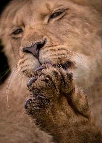 My good paw