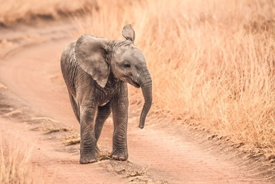 Baby Elephants in the Serengeti
