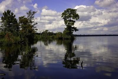 Dismal Swamp 2392