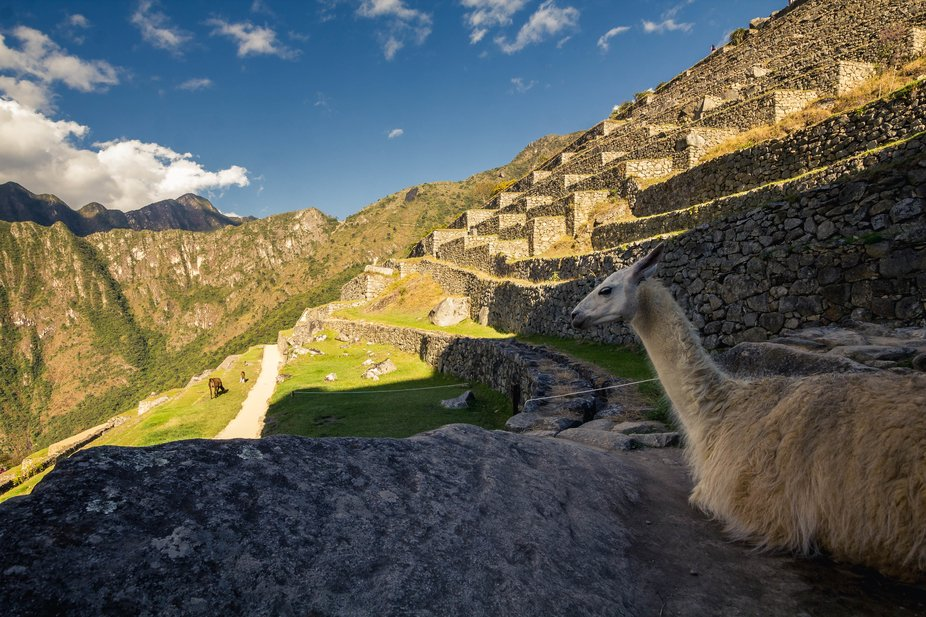 Residents of Machu Pichu