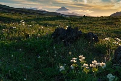 Volcano's Tundra