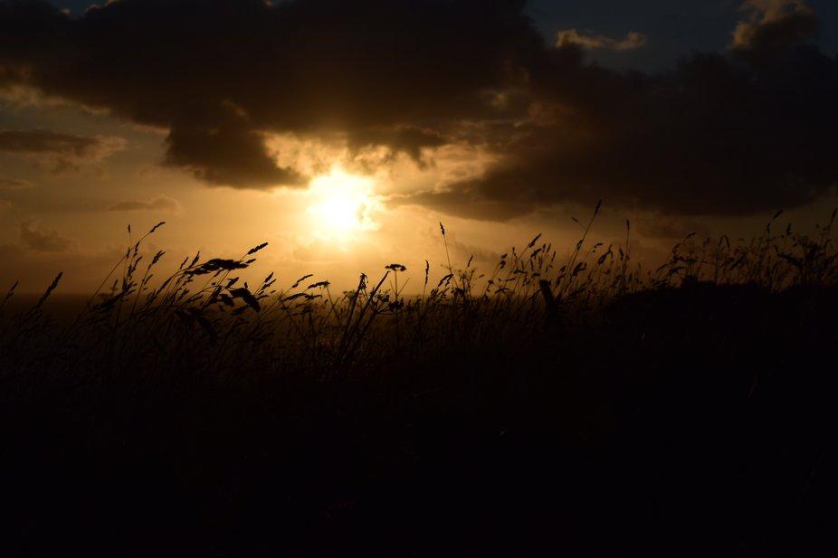 seagrass sunset